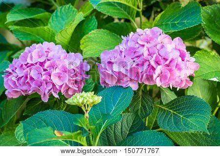 pink beautiful flowers growing in the green garden