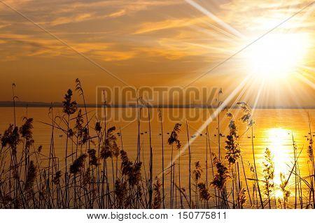 Sunset at Garda Lake (Lago di Garda) with reeds and sun rays. Lazise Veneto Italy