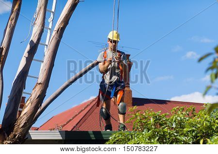 Tree Feller At Work