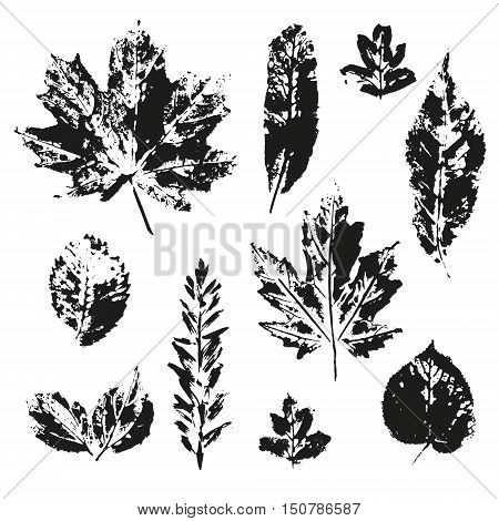 Vector leaves print set isolated on white background. Black silhouettes of leaves. Different kind of trees leaf collection.