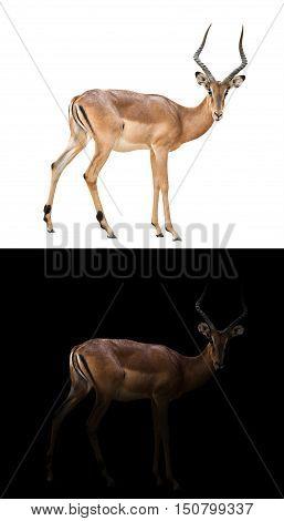 Impala In The Dark And Impala Isolated