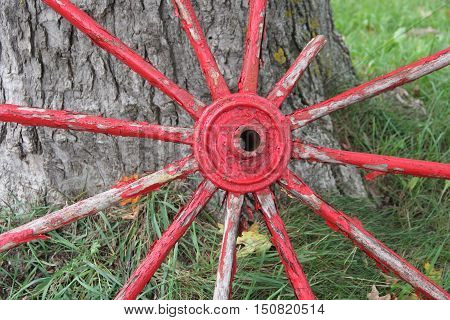 Spokes of a wagon wheel leaning against a tree in Sleeping Bear Dunes National Lakeshore, Michigan