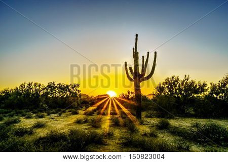 Sunrise with Sun Rays shining through the Shrubs in the Arizona Desert with a Saguaro Cactus in the Foreground