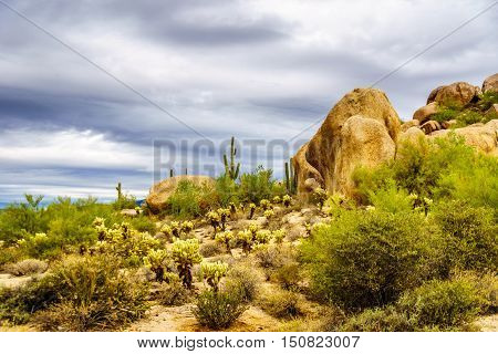 Desert landscape with Boulders with Saguaro and Cholla Cacti near the town of Carefree in Arizona, USA