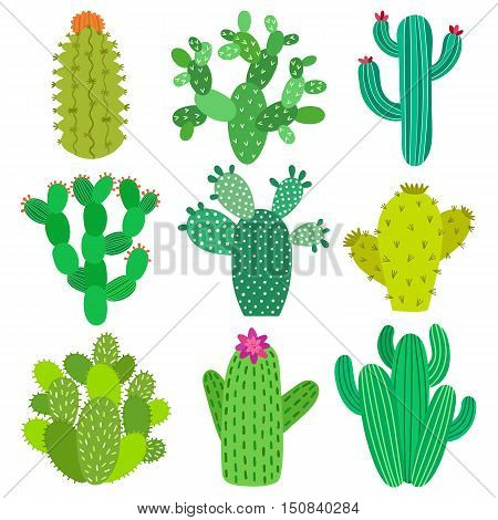 Cactus flower set. Hand drawn cactus plant collection. Vector