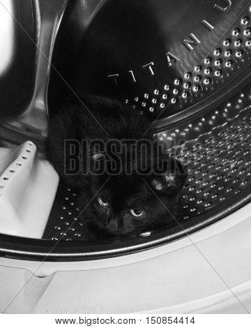 На этой фотографии черный котенок который сидит в стиральной машине.