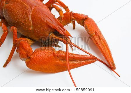 The Red Lobster