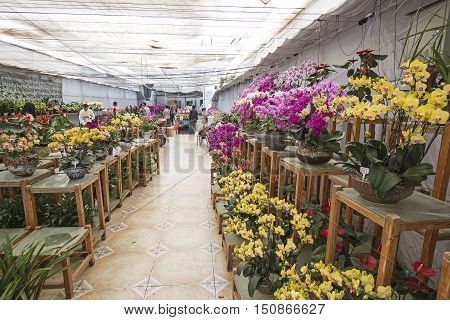 Kunming, China - October 7, 2016: People At The Kunming Dounan Flower Market The Biggest Flower Mark