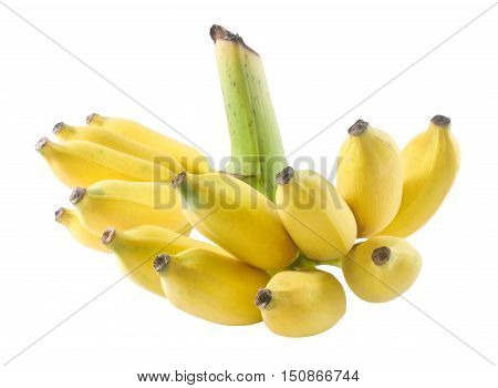 Fruits A Bunch of Ripe Wild Asian Bananas or Cultivated Bananas Isolated on White Background.