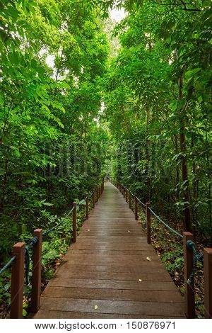 Walking path in summer park