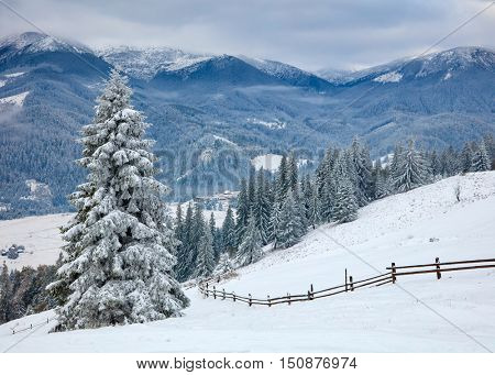 Winter concept.  Snowy trees and snowy mountains