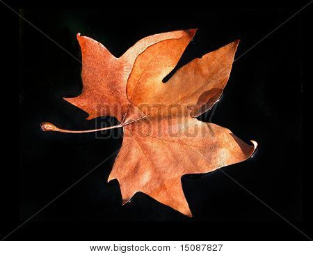 leaf floating in the water