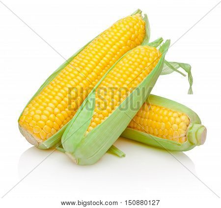 Three corn cob isolated on white background
