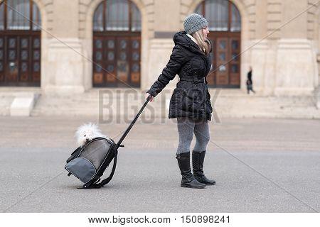 Bichon Havanese Dog In Bag