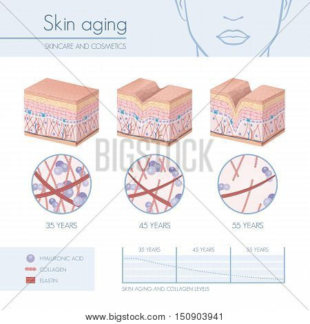 Skin aging stages diagrams collagen and elastin progessive decrease close up skincare infographics
