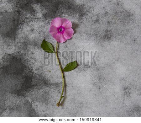 Violet flower on dark background - condolence card