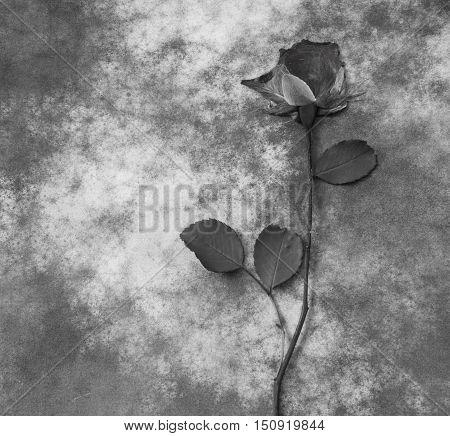Gray flower on dark background - condolence card