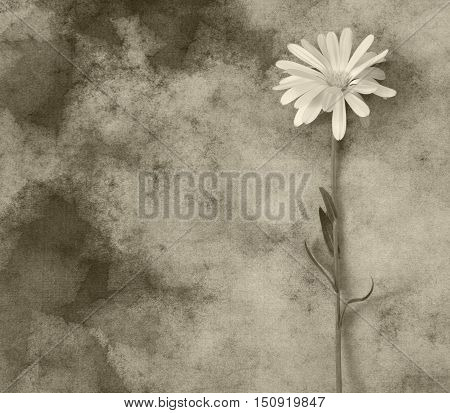 Gray flower on dark background - condolence card