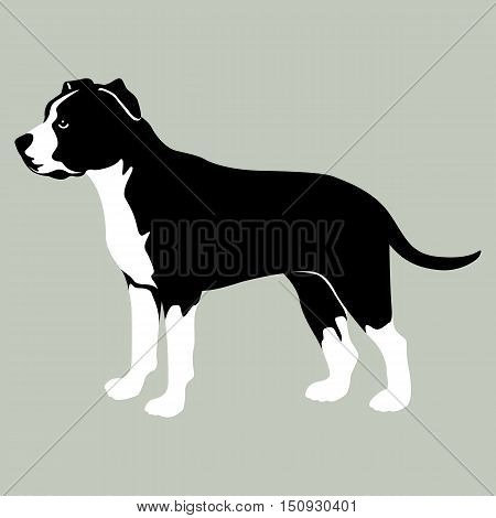 American Staffordshire Terrier vector illustration style flat