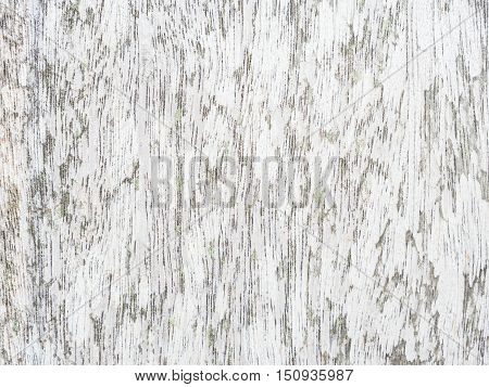 Pattern of gray wood background texture for  raw material.