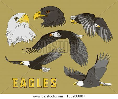 Set of eagles. Flying eagle. Vector illustration EPS 10