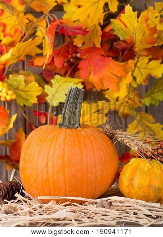 Closeup of a pumpkin with a colorful leaf background