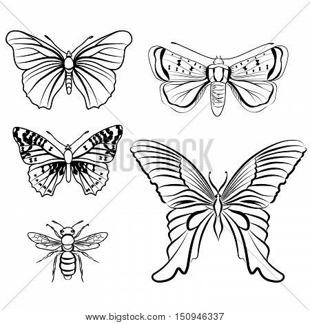 Butterfly set. Insect doodle sketch collection. Wild tropical fauna  etching outline design elements