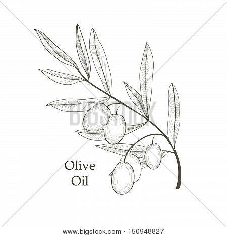 Olive-branch-02