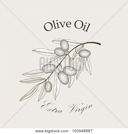 Olive tree branch with olives isolated sketch over white background Retro olive branch engraving Vector illustration