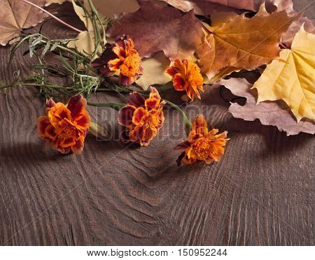 Autumn Leaves And Tagetes Flowers