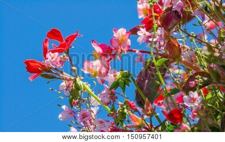 Composition of colorful flowers against a blue sky. Photographed on a San Fransisco street