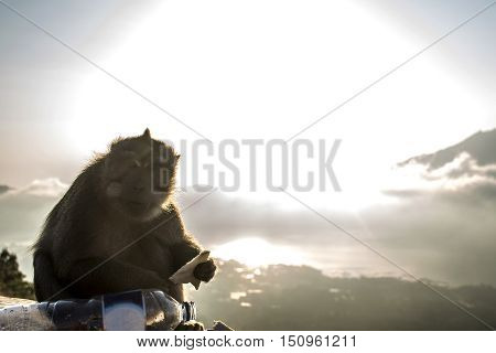 Bali Lake Batur volcano monkey view sunset over Gunung Agung