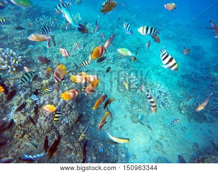 Coral Wildlife in Bali Indonesia underwater colorful fish 3