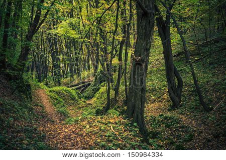 Scenic Forest Creek in Summer. Forestry Landscape.