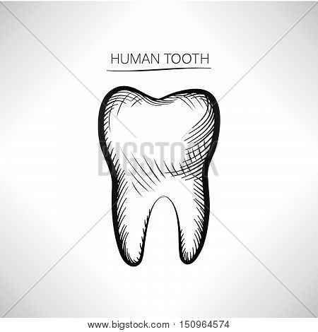 Tooth isolated. Tooth hand drawn sketch icon. Tooth symbol.