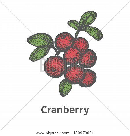 Vector illustration doodle sketch hand-drawn bunch of ripened red cranberry. Isolated on white background. The concept of harvesting. Vintage retro style. Ripe mooseberry