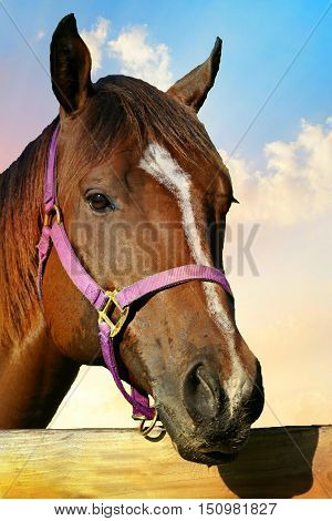 Sun drenched thoroughbred horse at the fence