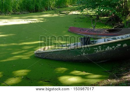 close up of part of green rowing boat submerged in water with leaves.