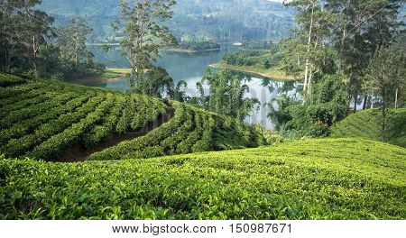 Sri Lanka's Hill Country and Tea estates