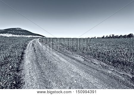 Dirt Road Leading to the Flowering Almond Garden at the Foot of the Mount Tabor in Israel Stylized Photo