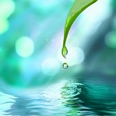 green leaf with water drop water on blue sunny background poster
