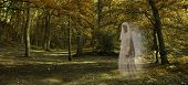 Ghostly figure gliding through Autumn Forest  - Wide autumnal woodland scene with a transparent glowing female ghost wafting across from right side staring out and late evening lighting poster