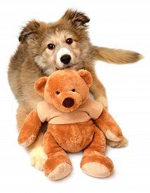 Beautiful cute puppy dogs and teddy bear isolated on white background. Soft toy animal