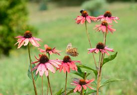 Pink flowers with one butterfly in the green background.