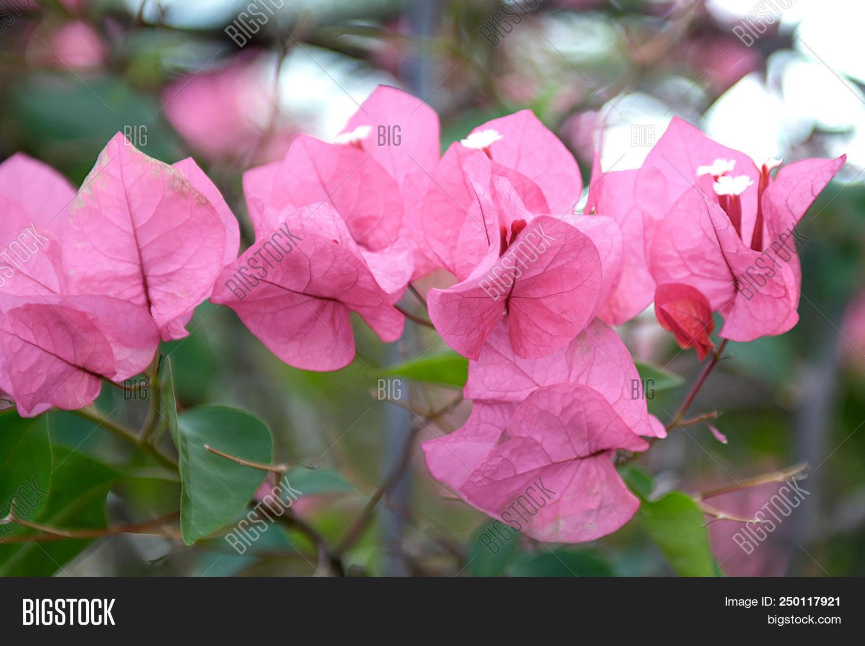 Beautiful Colourful Image Photo Free Trial Bigstock