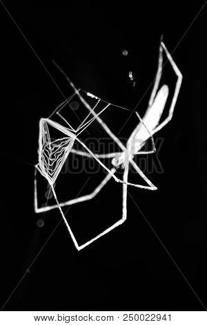 Abstract Black And White Image Of Ground Spider Creating Web To Throw At Prey
