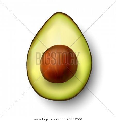vector avocado illustration