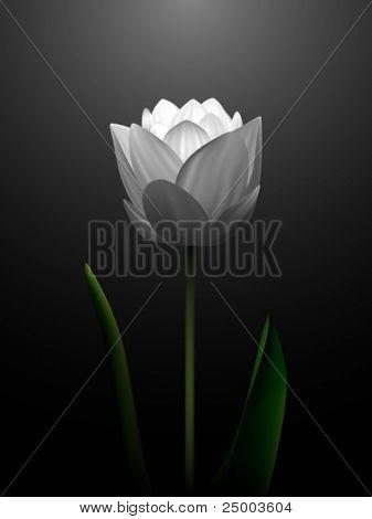 vector flor ilustração