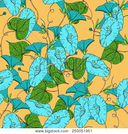 Vector Colored Pattern With Blue Bindweed On Bright Background. Vintage Flowers.