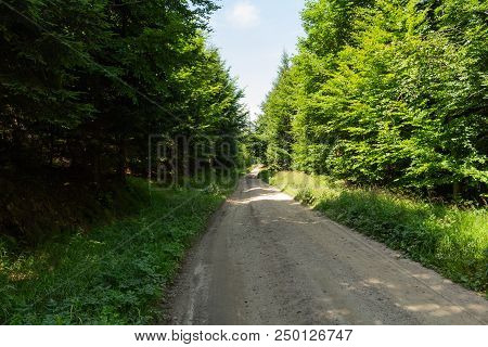 Cycling In Nature Forest On A Rainy Day. Road In Forest Nature. Green Forest Road. Nature. Road. Nat